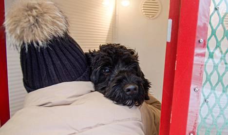 Koiraparkin lämpötila on lemmikeille oikea säällä kuin säällä.