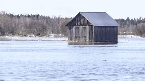 Näin Kyrönjoen voima peittää pellot – katso video kevään tulvista