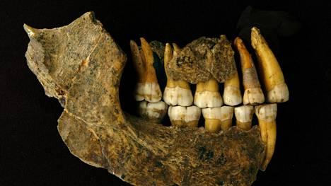 Uudessa tutkimuksessa ajoitettiin muun muassa tämän neandertalinihmisen leuan ikää.