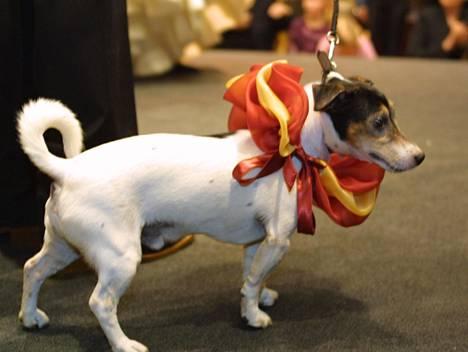 Helsingin Stockmannilla järjestettiin koirien muotinäytös vuonna 2002.