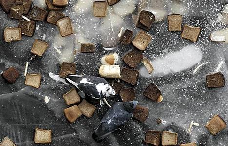 Pulut popsivat leipää Moskovassa 31. tammikuuta.
