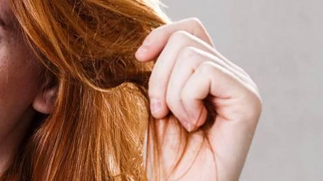 Kuivia ja hapsottavia latvoja voi yrittää elvyttää myös kotona saksiin tarttumatta.