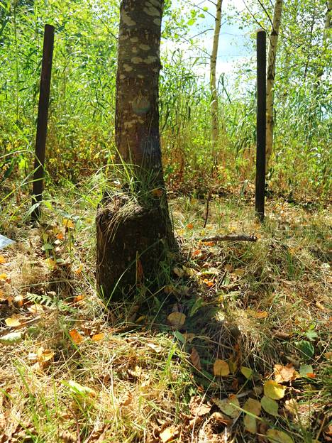 Nykyään karusellista muistuttaa koivun juurella heinää kasvava tolppa, jonka salko kannatteli aikanaan karusellia.