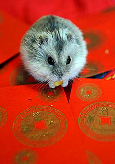 Lemmikkihiiri viivästytti lentokoneen lähtöä useilla tunneilla Kiinassa. Kuvan hiiri ei liity tapaukseen.