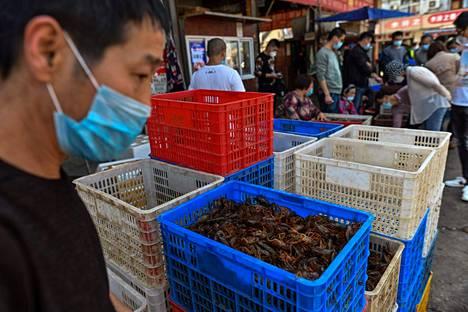 Koronaviruksen lähtöpisteenä pidetyssä Kiinan Wuhanissa sijaitsevalla Baishazhoun ruokatorilla myytiin katkarapuja huhtikuun puolivälissä.