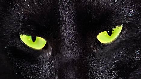 """Tietokantoja tuhoava nettihyökkäys jättää jälkeensä vain sanan meow - eli suomeksi """"miau""""."""