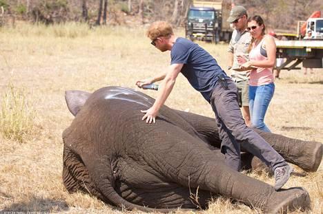 Afrikka ja sen villieläimet ovat lähellä herttuaparin sydäntä. Kuvassa prinssi Harry Malawissa tekemässä hyväntekeväisyystyötä.