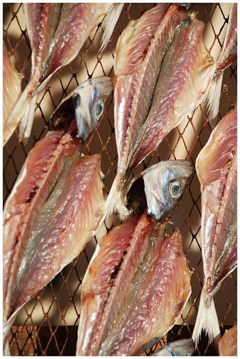 Kalaa kuivataan Portugalissa joissakin paikoissa vielä vanhanajan menetelmillä auringossa.