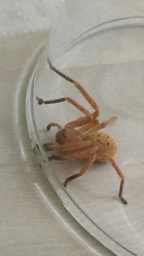 Valve ystävineen vangitsi hämähäkin lasisen kuvun alle.