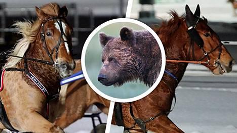 Ravihevoset Tosi Voima ja Montsan Vippi joutuivat harvinaisen hyökkäyksen kohteeksi. Kuvituskuvan karhu ei esiinny jutussa.