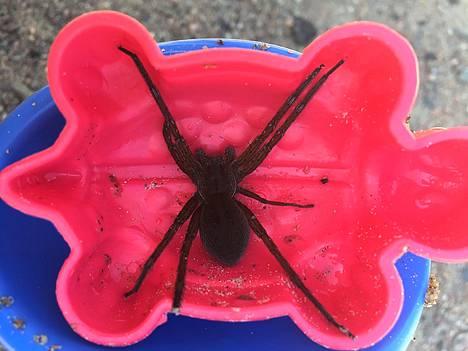 Isorantahämähäkkejä on Suomessa miljoonia, tutkija arvioi.