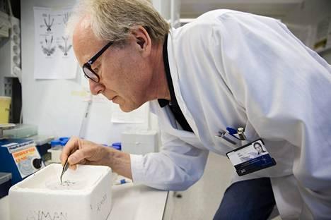 Helsingin yliopiston immunologian professori Seppo Meri.