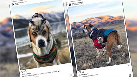Herttaiset kuvat löytökissan ja -koiran yhteisestä taipaleesta ovat keränneet valtaisan fanijoukon