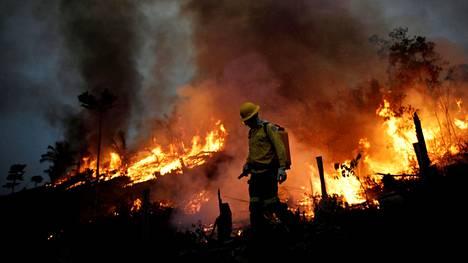 Palomies yrittää sammuttaa Amazonin alueella riehuvaa maastopaloa Apuissa, Brasiliassa.