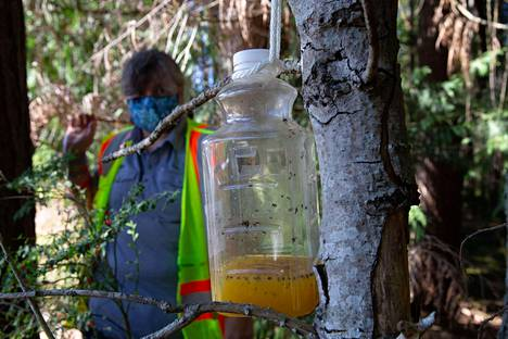 Ansa on viritetty. Pullon pohjalle jätetty mikstuura on sekoitus appelsiinimehua ja riisiviiniä.