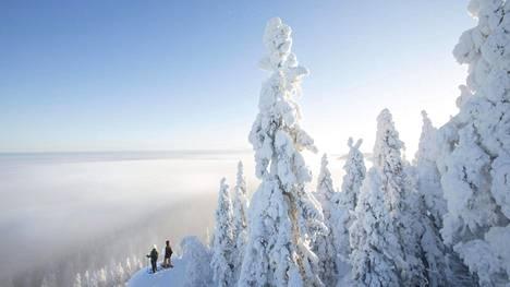 Lumikenkäilijät ihailevat Kolin maisemaa.
