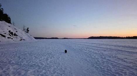 Iltalenkillä jäällä Espoon Laurinlahdessa.