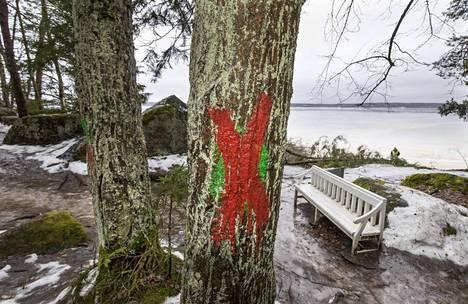 Punainen rasti on merkki kaadettavasta puusta.