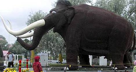 Penismammutti kastroitiin kohun takia Kuopiossa keskiviikkona. Tässä kuvassa mammutti on matkalla Savonlinnassa.