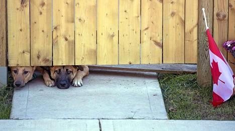 Cirilloa jäävät kaipaamaan tämän koirien, perheen ja ystävien lisäksi miehen 6-vuotias Marcus-poika.