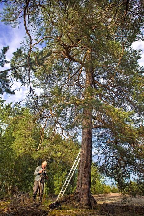 Ennen puuhun kiipeämistä on syytä panna turvavälineet päälle.