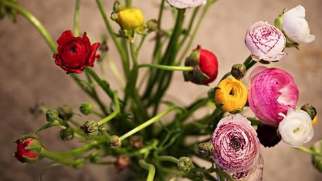 Floristimestari Pasi Kivilompolo vinkkaa, mitkä maljakkokukat kestävät pidempään ja miten niitä hoidetaan.