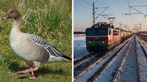 Tunnelmallista matkantekoa tavarajunalla – mutta yllätys ja hengenvaara voi vaania jo lähimmän kaarteen takana...