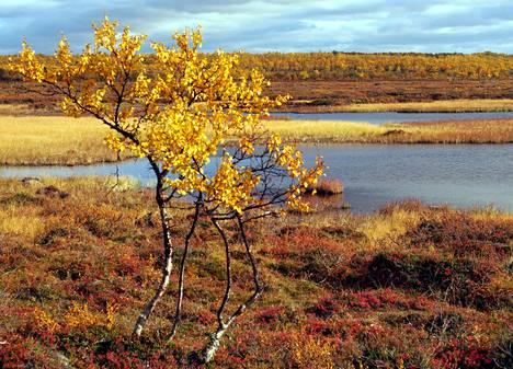 Suomi valittiin vastikään maailman parhaaksi luontokohteeksi.