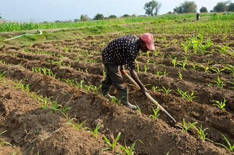 ZNFU oli myös nostanut yli miljoonalla eurolla varoja lainoista, jotka oli tarkoitettu pienviljelijöille.
