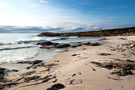 Tasmania ei sovi uimista rakastavalle, sillä merenkäynti on useimmilla rannoilla liian rajua. Meren kauneutta kelpaa ihailla rannalta käsin.