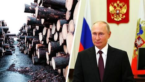 Putin kertoi tulevasta raakapuun vientikiellosta keskiviikkona Kremlin nettisivuilla.