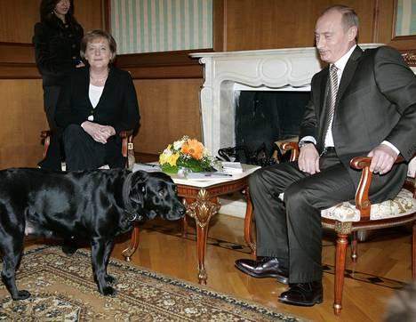 Vuonna 2007 Vladimir Putin vei Konni-koiransa tapaamaan Angela Merkeliä, joka pelkää koiria.