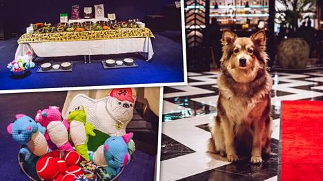 Myytiin loppuun jo lokakuussa: Lähes 300 koiraa valtaa hotellin Vantaalla uutena vuotena – tarjolla makoisa illallisbuffet