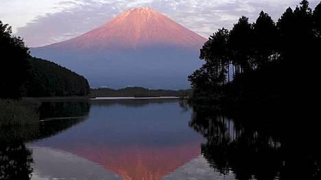 Fuji-vuoren juurella sijaitsevasta Aokigaharan metsästä löytyy vuosittain yli sata itsemurhan tehnyttä.