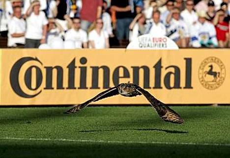 Huuhkaja kävi kentällä näyttämässä, kuka on stadikan todellinen isäntä.