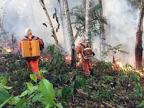 Palomiehet yrittivät sammuttaa metsäpaloa Brasilian Porto Velhosin alueella 18. elokuuta.