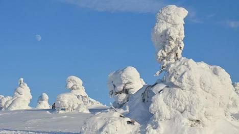 Lapin jylhä luonto saa talvisin lumipeitteen.