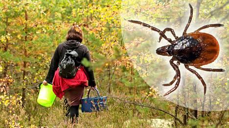 Ihmiset kulkevat paljon metsässä syksyisin. Se takaa punkeille aterian.
