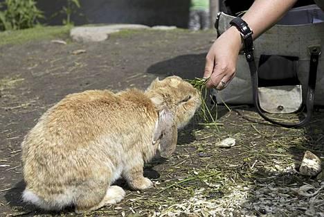 Ysitien lemmikki on Jyväskylän lastenkohteista vähemmän tunnettu, mutta turhaan, sillä se on takuuelämys lapsille. Eläimet ovat tuttavallisia ja esimerkiksi pupuja saa mennä ruokkimaan, silittämään ja ottamaan syliin. Ysitien lemmikissä on yli sata eläintä, joista voisi mainita pupujen lisäksi laamat, strutsit ja villisiat. Myös eläinvauvoja on nähtävissä.