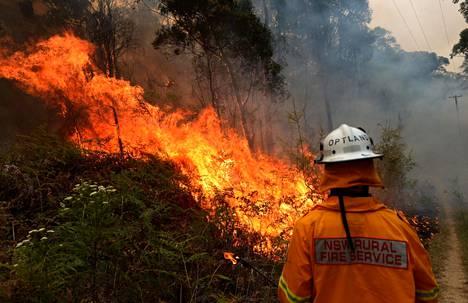 Palomiehet työskentelivät maastopalon rajaamiseksi Colo Heightsissa Uudessa Etelä-Walesissa lauantaina.