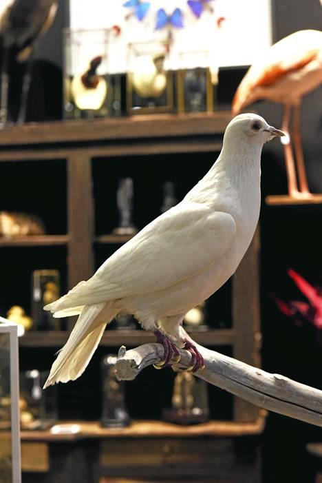 11. Eläimet: Toimivat sisustuselementteinä muuallakin kuin lastenhuoneissa. Näytteillä oli kaikkea koriste-esineistä ja lampuista täytettyihin eläimiin.