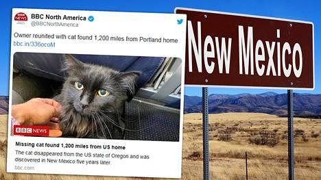 Oregonista kadonnut Sasha-kissa löytyi hiljattain New Mexicon osavaltiosta.