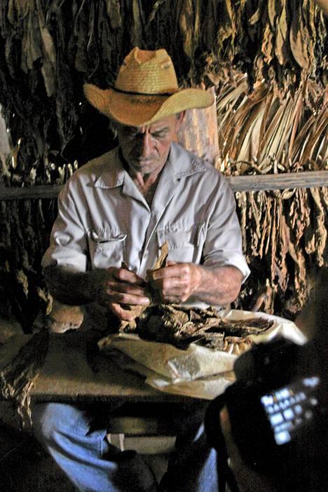 Maaseudulla voi seurata tupakan viljelyä ja sikarien valmistusta.