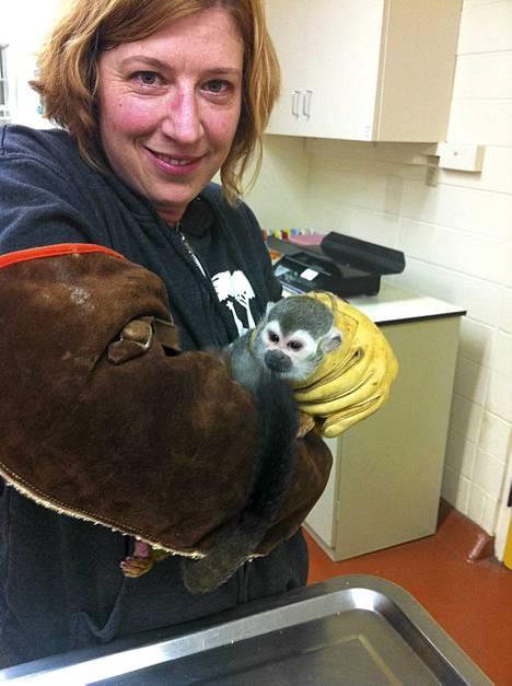 San Franciscon eläintarhan kädellisten osaston apulaiskuraattori Jill Andrews piti Banaani-Samia sylissään lauantaisessa eläinlääkärintarkastuksessa.