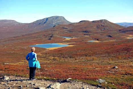 Kilpisjärven Mallan luonnonpuistosta avautuu näkymä Saanan huipulle ja Mallan lammille.