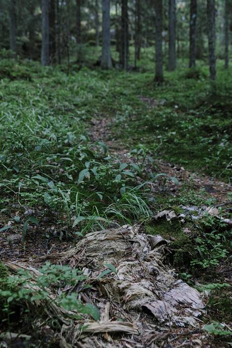 Nuuksion kansallispuisto tarjoaa luontomatkailumahdollisuuksia lähellä pääkaupunkia.