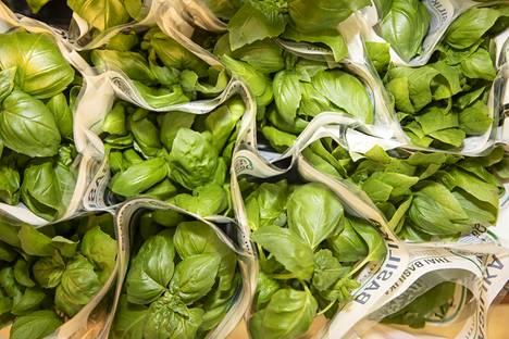 Yrttejä voi säilyttää pakastetussa ruokaöljyssä. Jääpalamuotin avulla voi valmistaa valmiita yrttikuutioita.