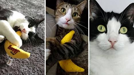 """Video: Tämä lelu pistää kissojen pään sekaisin – """"huumebanaani"""" sisältää erittäin voimakasta kissanminttua"""