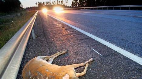 Kuvan peura joutui auto-onnettomuuteen vuonna 2007.