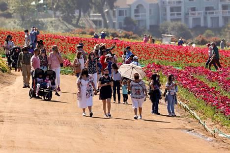 Kukkakedoille on voitu ottaa tänä vuonna rajoitettu määrä vierailijoita, sillä koronarajoituksia on alettu hiljattain purkamaan Kaliforniassa.